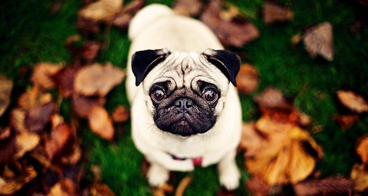 Recopilación de los perros más divertidos