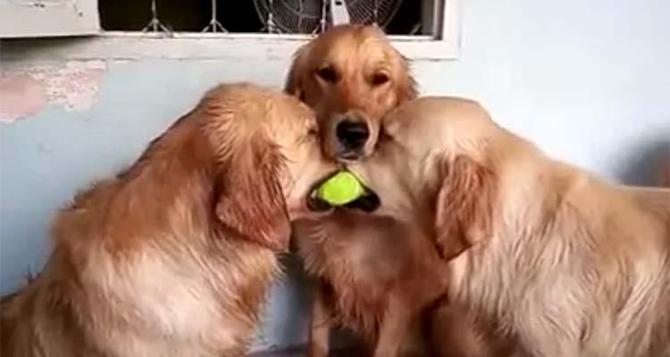 Dos perros tontos y uno muy listo