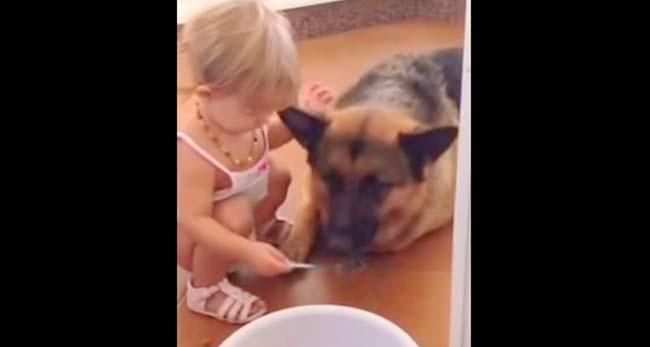 La tierna amistad entre un pequeño bebé y un gigantesco pastor alemán