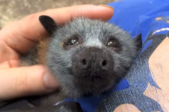 ¿Odias los murciélagos? Tienes que ver este vídeo