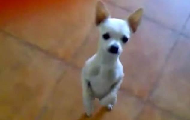Cinco perretes que bailan mejor que tú… y lo sabes