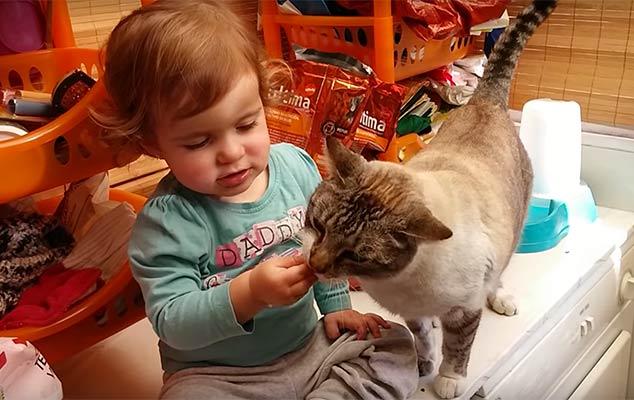 La niña que no sabía identificar los orificios de su gato
