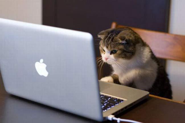 Gato con un Mac