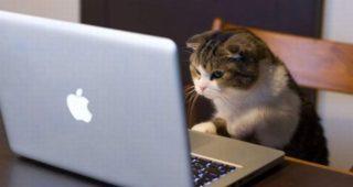 Las 5 publicaciones más destacadas de Sector Viral en Facebook (Semana 1)