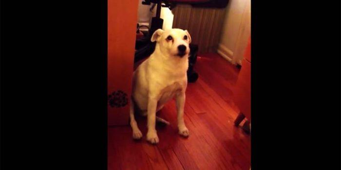 El perro que se volvió viral por ser demasiado culpable