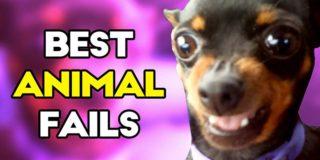 Los fails de animales más divertidos de 2016