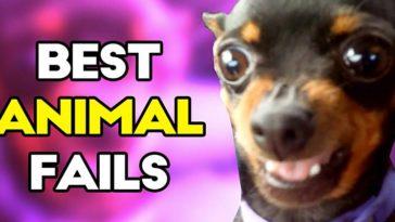 Best animal fails