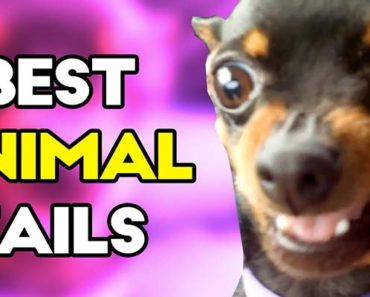 Best animal fails