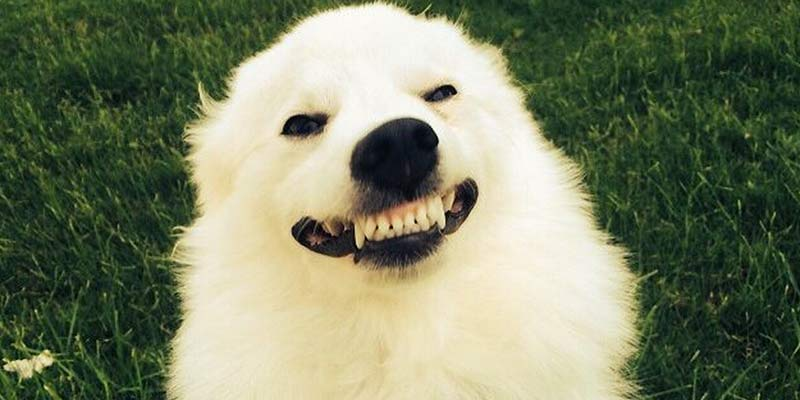 24 chistes tan malos que no pararás de reír