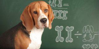 Si crees que puedes resolver esta ecuación, entonces eres realmente UN GENIO