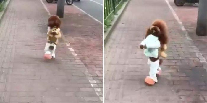 El vídeo viral del perro que camina erguido no es tan divertido cómo crees