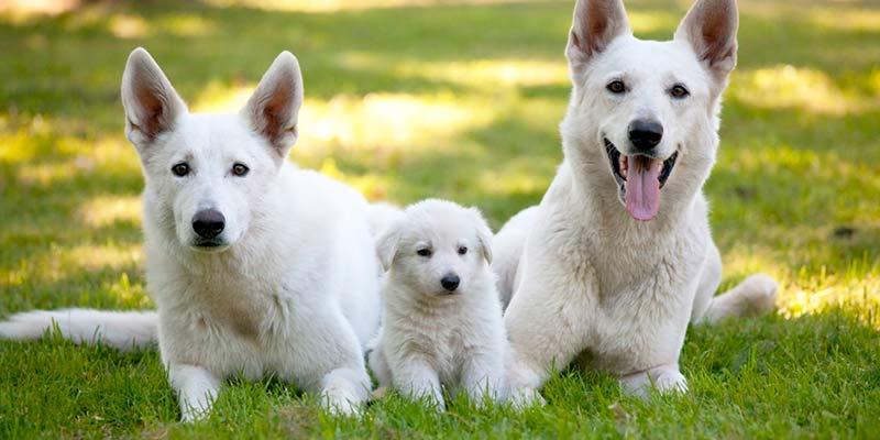 Descubre cuál es la EDAD HUMANA de tu perro