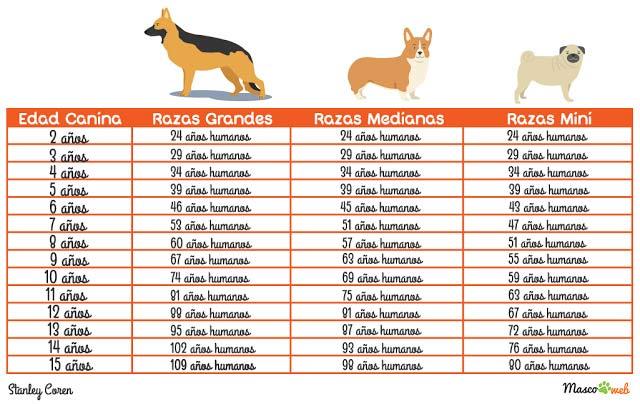 Tabla edad canina
