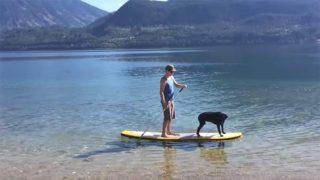 Perro haciendo paddle surf