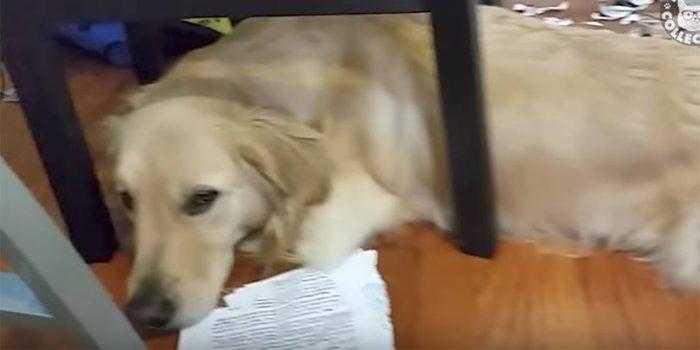 No te puedes perder esta recopilación de perritos que se sienten muy culpables