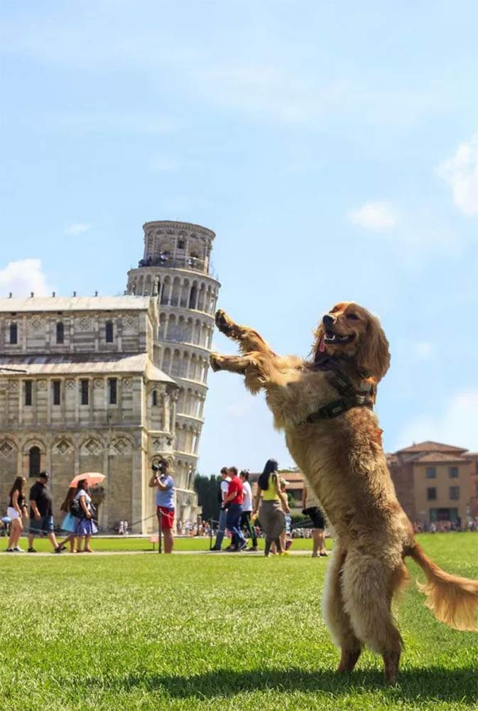 Perro en la torre de Pisa