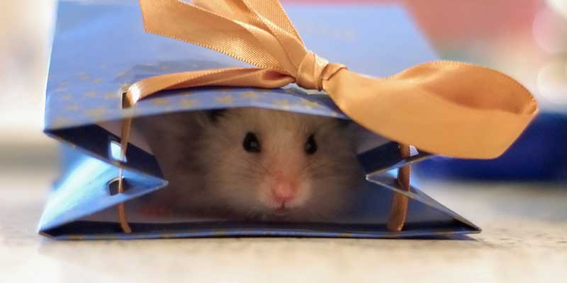 12 regalos divertidos