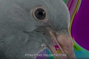 Pitas Pitas Palomitas Pitas