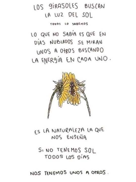 La lección vital de los girasoles