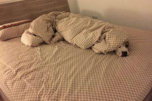 Mascotas robando camas