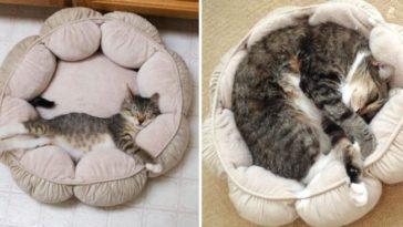 Gatos que crecieron muy rápido