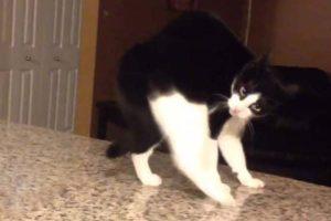 Vídeos de gatos