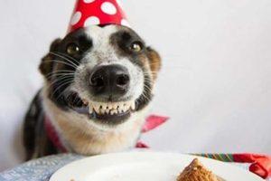 Perro con tarta