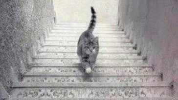 Gato subiendo o bajando