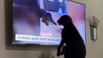 Perro se hace viral