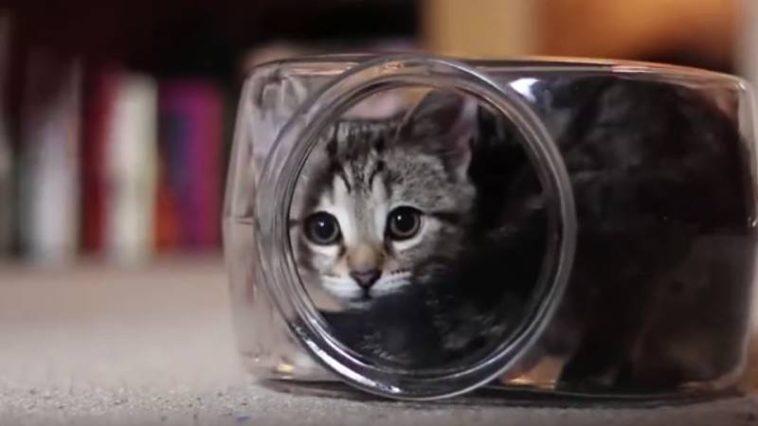 Gato en una pecera